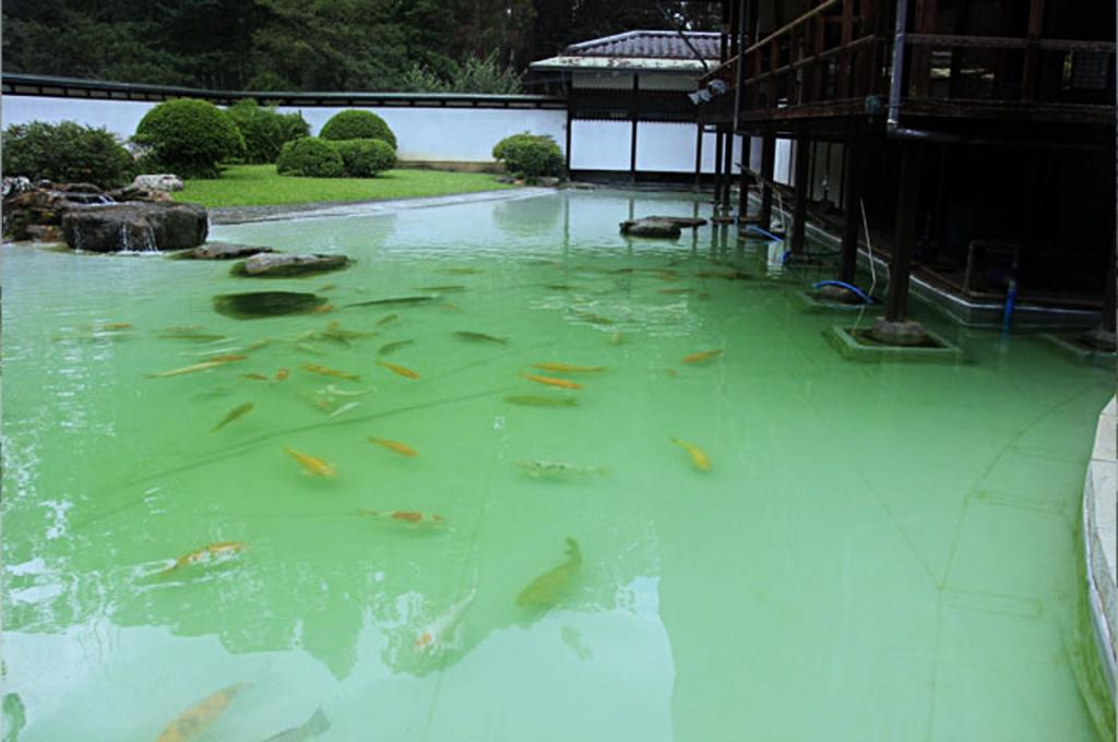 lagoa com manta de pvc